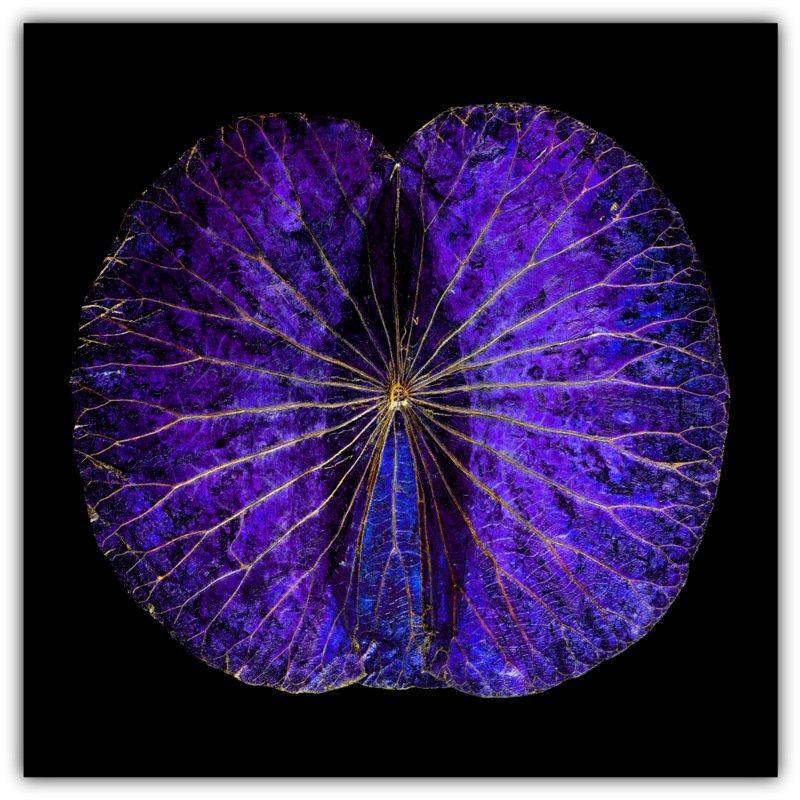 Lotusblatt alu mirror pk2 70x70 229 00 lotus w for Miroir 70x70